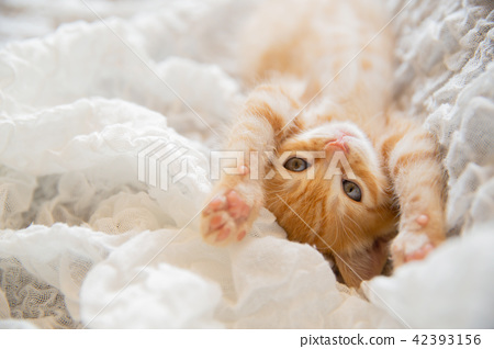 一隻小貓 42393156