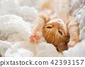 一隻小貓 42393157