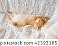 一隻小貓 42393165