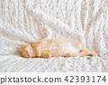 一隻小貓 42393174