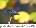 연못 나비 잠자리 4 42395492