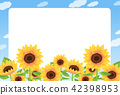 sunflower 42398953