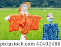 稻草人 有名無實的領袖 水稻 42402486