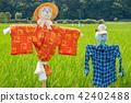 稻草人 有名無實的領袖 水稻 42402488