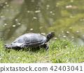 거북이, 일광욕, 물가 42403041