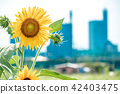 ดอกไม้,อาคาร,กลุ่มอาคาร 42403475