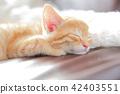 一隻小貓 42403551
