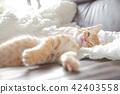 一隻小貓 42403558