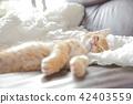 一隻小貓 42403559
