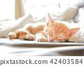 一隻小貓 42403584