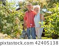 senior, couple, garden 42405138