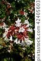 꽃, 플라워, 백색 42405603