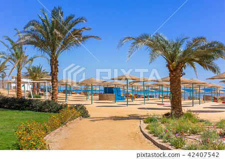 Parasol on the beach of Red Sea in Hurghada, Egypt 42407542