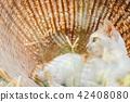 Cute cat in basket. Best friend concept. 42408080