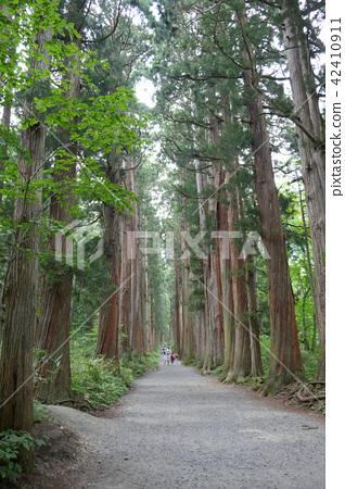 Togakushi Shrine Okusha的雪松路(2) 42410911