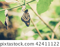 Hanging butterflies and cocoons on green leave 42411122