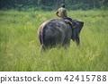 animal elephant elephants 42415788