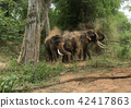asia Elephant in the forest 42417863