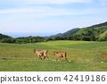 동물, 목장, 초원 42419186
