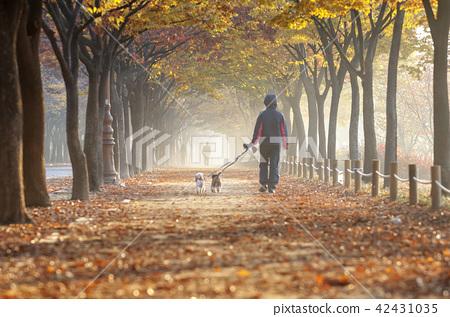 인천,인천대공원,낙엽 42431035