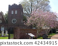 Saint Paul Episcopal Church and Sakura Tree 42434915