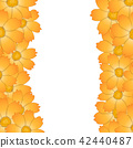Orange Yellow Cosmos Flower Border 42440487