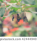 Hanging butterflies and cocoons  42444940