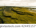 The coast rocks overgrown by green algae. 42445157