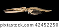 Real whale skeleton isolated on black background 42452250