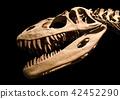 Dinosaur skeleton on black isolated background 42452290