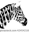 Zebra, Black and White Portrait. 42454218