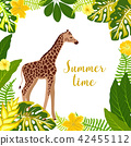 tropical, safari, giraffe 42455112