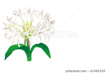 Flower of prefecture Miyazaki Hamayuu 42460185
