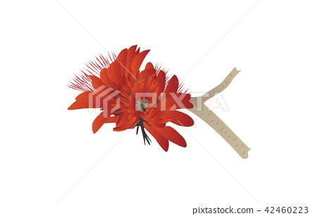 Flower of prefecture Okinawa deigo 42460223