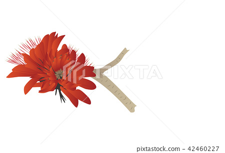 Flower of prefecture Okinawa deigo 42460227