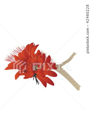 Flower of prefecture Okinawa deigo 42460228