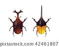beetle, bug, insect 42461807