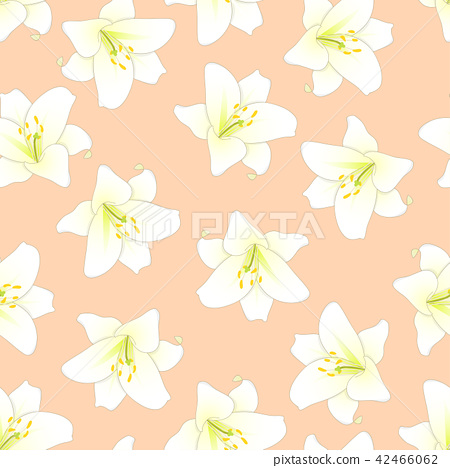 White Lily on Orange Peach Background 42466062