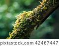 snail tree branch 42467447