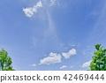 숲 이미지 42469444