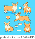 Welsh corgi dog 42469495