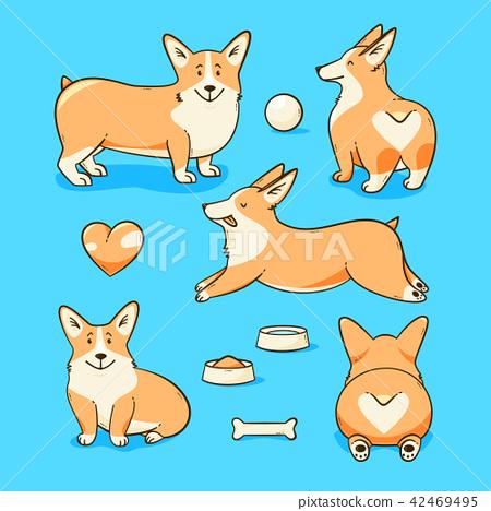Welsh corgi dog 42469495