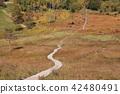 가을 잔디 단풍으로 물드는 入笠 습지 42480491