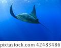魚 海 大海 42483486