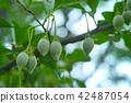 때죽 나무 열매 에코 이미지 42487054