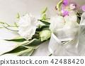 카네이션, 유스토마, 꽃도라지 42488420