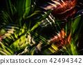 Bromeliad Abstract 42494342