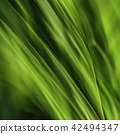 Fronds Abstract 42494347
