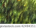 Plant Abstract 42494351