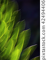 Plant Abstract 42494406